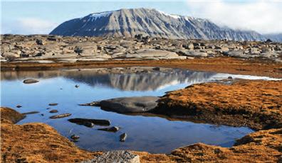 Ist der Schnee einmal weg, erwacht die Vegetation der Tundra zu Leben.
