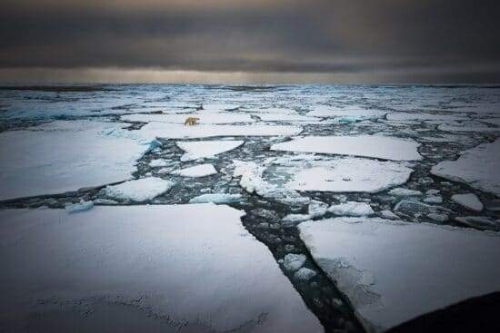 EEisbären im Nordpolarmeer
